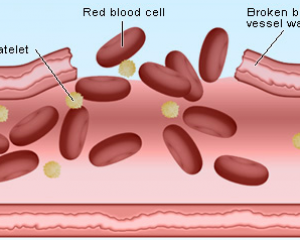 Food that can increase your platelet counts